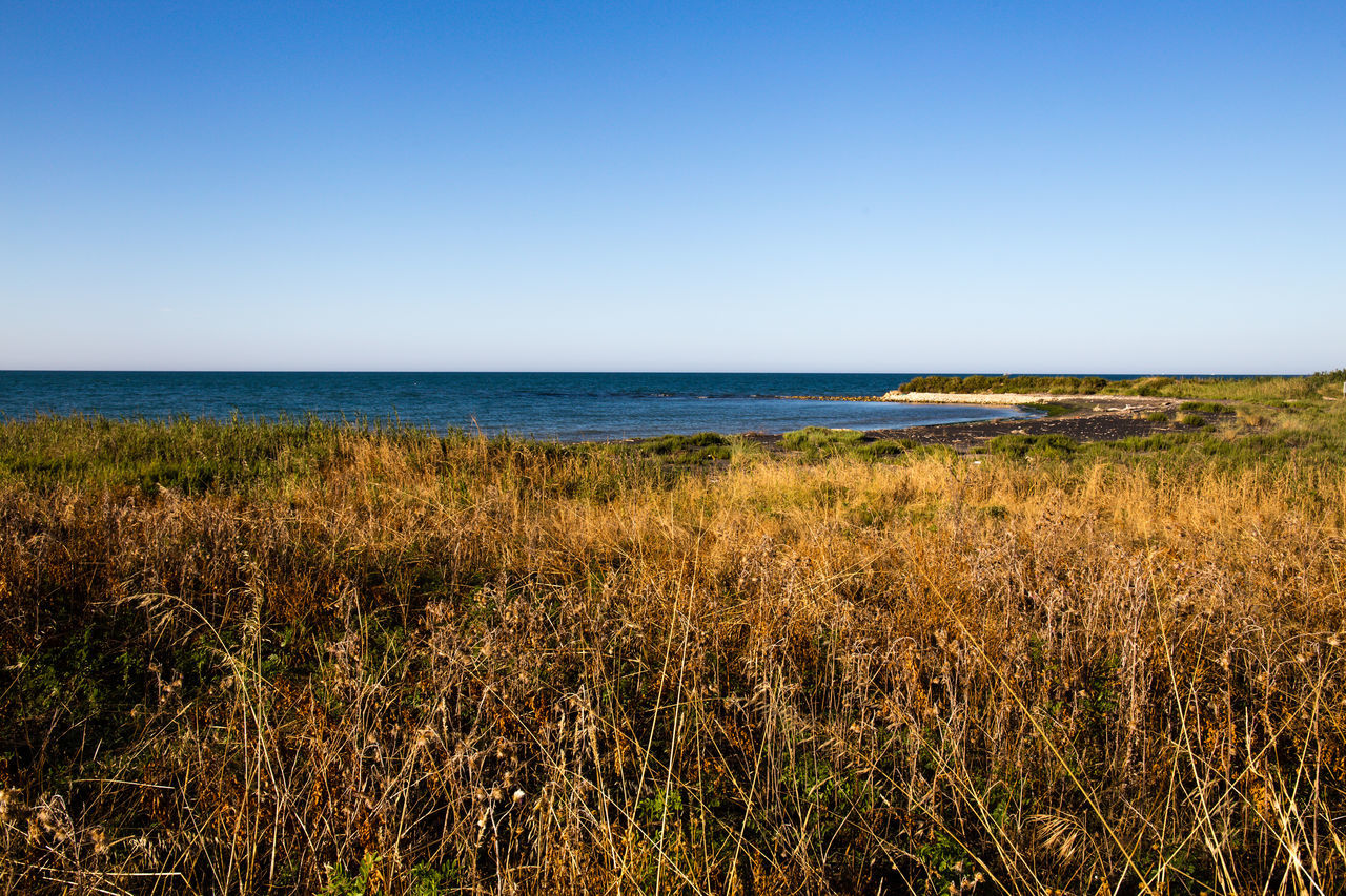 mediterranean vevegation Beach Beauty In Nature Blue Clear Sky Copy Space Day Grass Growth Horizon Over Water Marram Grass Mediteranean Mediterranean Sea Mediterranean Vegetation Nature No People Outdoors Plant Scenics Sea Sky Tranquil Scene Tranquility Water