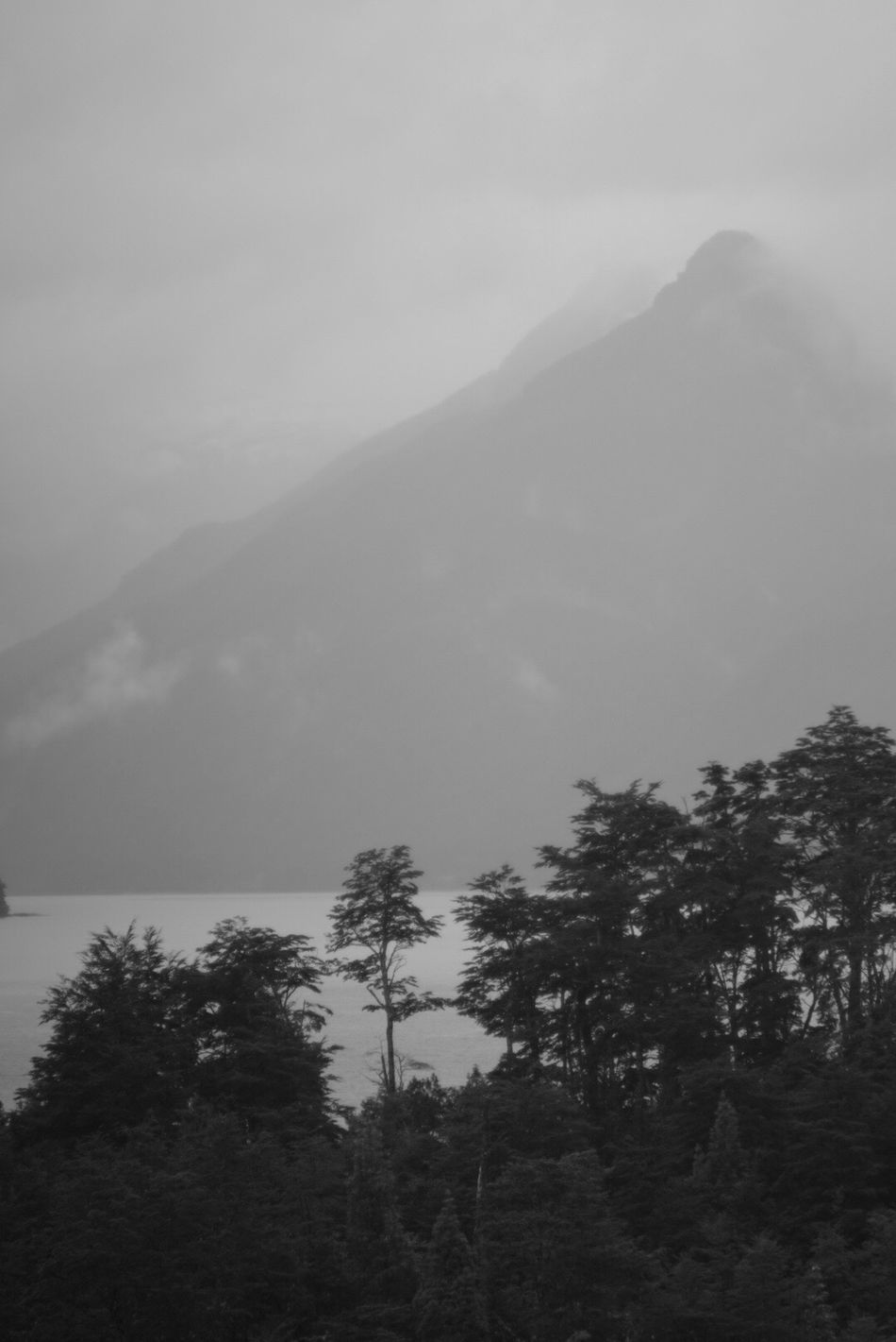 Mundo Jurasico Tree Mountain Growth Nature Fog Rain Landscape Lake No People Outdoors Scenics Beauty In Nature Tranquility Tranquility Solitude Tranquil Scene Untouched Faded Chile Sony A6000 EyeEm Nature Lover Black And White Blackandwhite Black & White Eye4photography