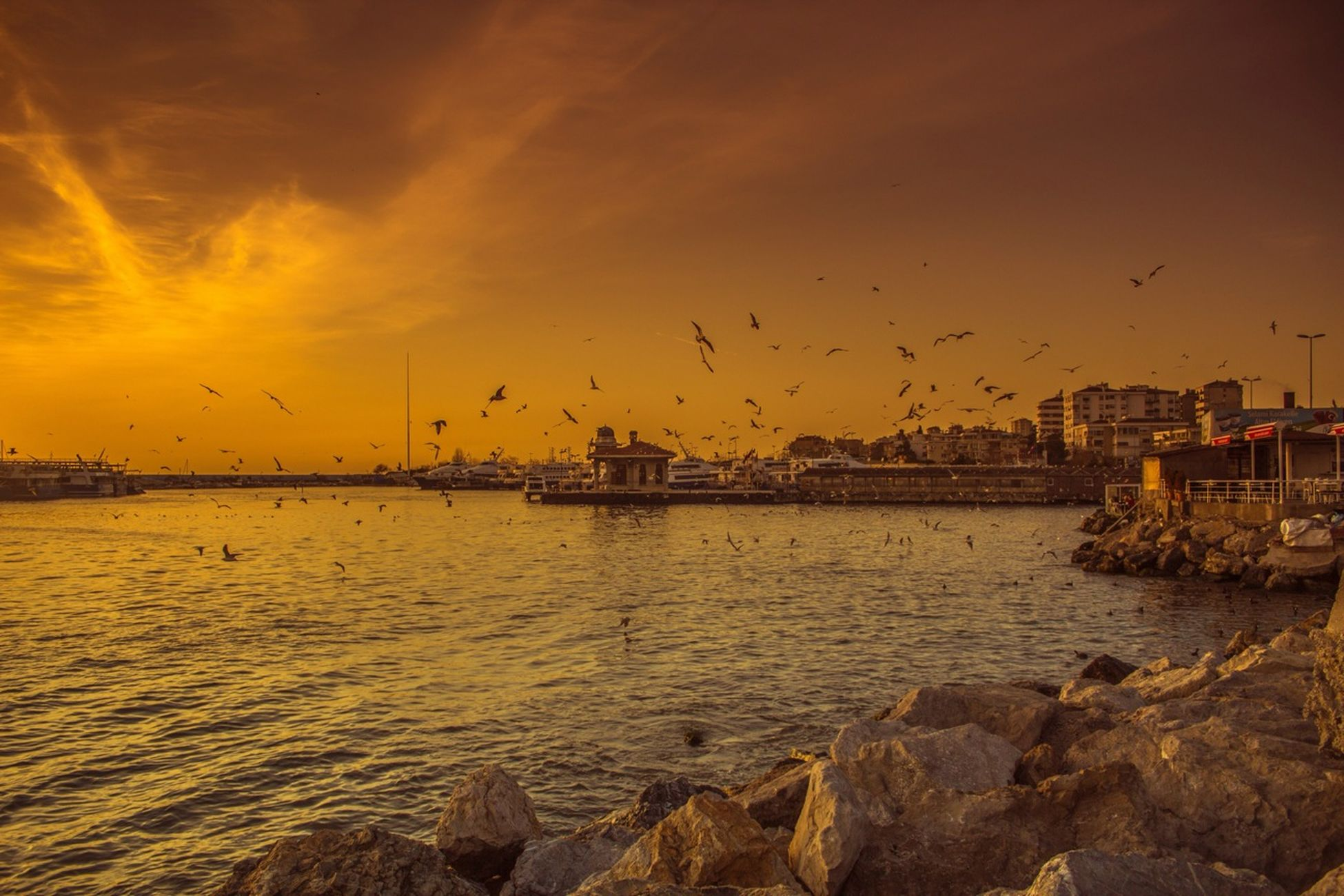Relaxing Sea Sunset Seagulls Seaside Istanbul EyeEm Masterclass EyeEm Istanbul Meetup Eye4photography  Bisgen