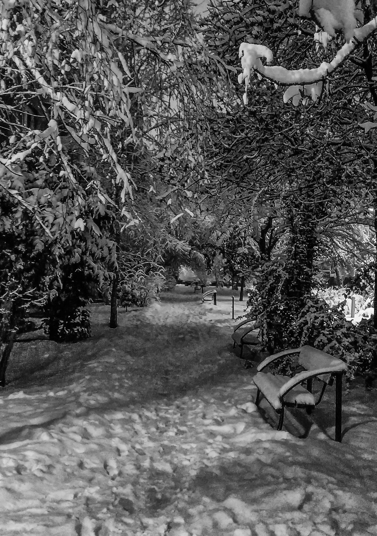 The white path Bench Branches City Ice January Macedonia Nature Nature Outdoors Path Skopje Snow Tree Tree Urban Weather White Winter
