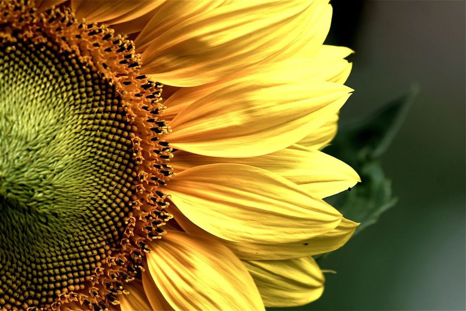 Beautiful stock photos of single, Beauty In Nature, Berlin, Close-Up, Cropped