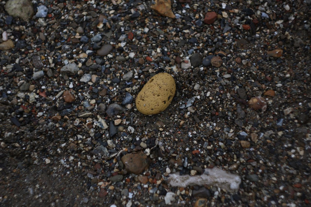 beach, pebble, outdoors, no people, nature, sand, day, close-up, animal themes