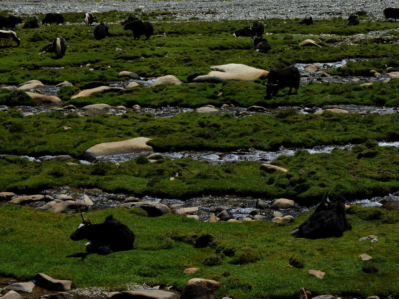 Aerial View Agriculture Animal Animal Themes Day Domestic Animals Flock Of Sheep Grass Grazing Green Color Herd Jammu And Kashmir Large Group Of Animals Leh Ladakh Livestock Mammal Nature No People Outdoors Pasture Rural Scene Sheep