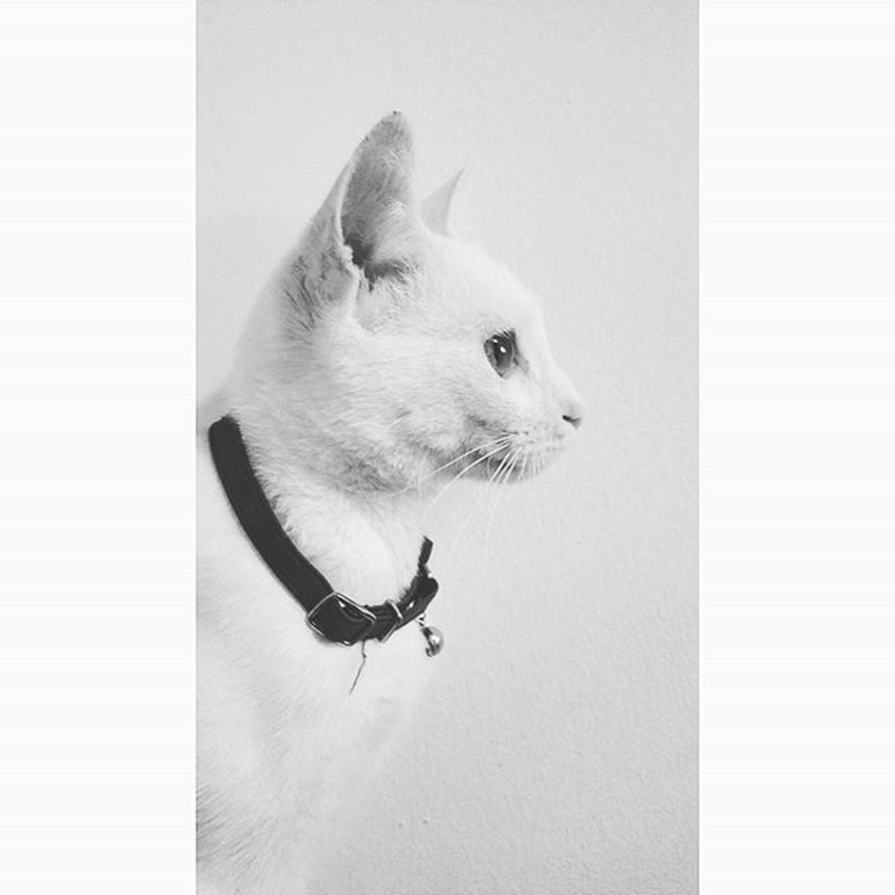 Highkey Ig_contrast_bnw Bnw_society Bnw_life Ig_bnw Bnw_captures High Key Highkey__ Catlife Catsofinstagram Catlovers Cats Bnwsouls Amateurs_bnw Bnw_drama Rsa_bnw Top_bnw Pocket_bnw Bw_lover Bw_mania Foto_blackwhite Bnw_life_shots Sombrebw Bnwmood Blackandwhite contrast lights shadows bnw bwworld_tr