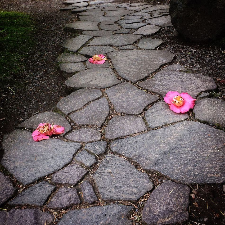 No People Flower Pink Color Outdoors Day Nature Petal Beauty In Nature Flower Head Camllias Path Stone Path Flowers On Path