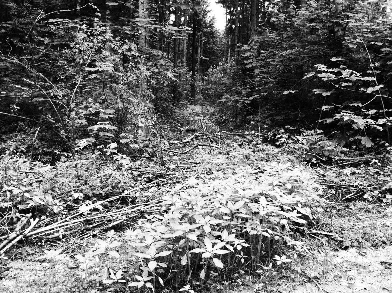 Blackandwhite Monochrome Nature Landscape