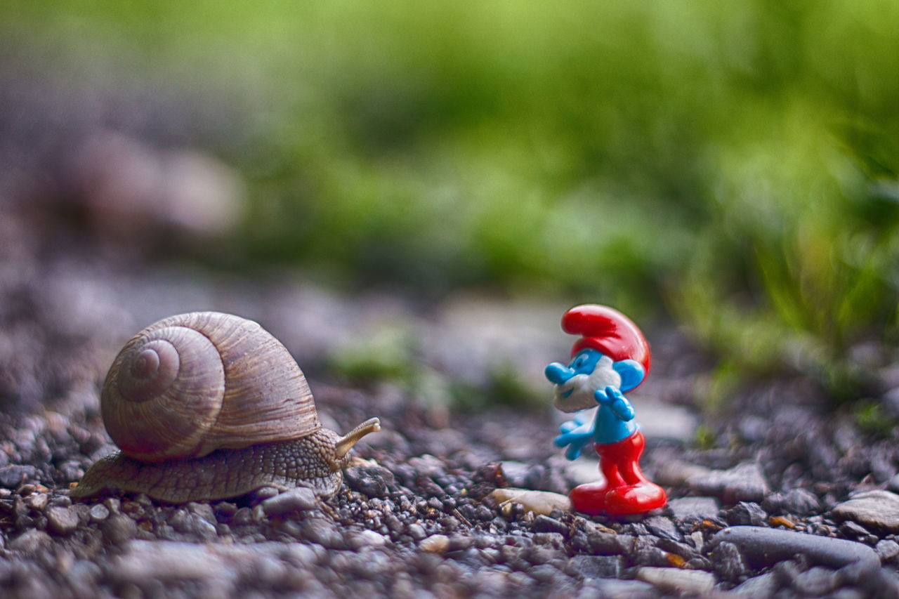 Animal Themes Animals In The Wild Childhood Close-up Day Figurine  Focus On Foreground Gastropod Nature No People One Animal Outdoors Smurf Smurf Style Smurfday Smurfs Smurfs Village Smurfs2 Smurfy Snail