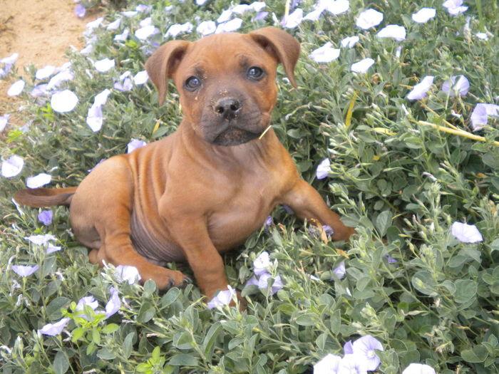 Beauty Flowers LovingHim My Beautiful Dog Pets Pretty Face  Purple Tiredface