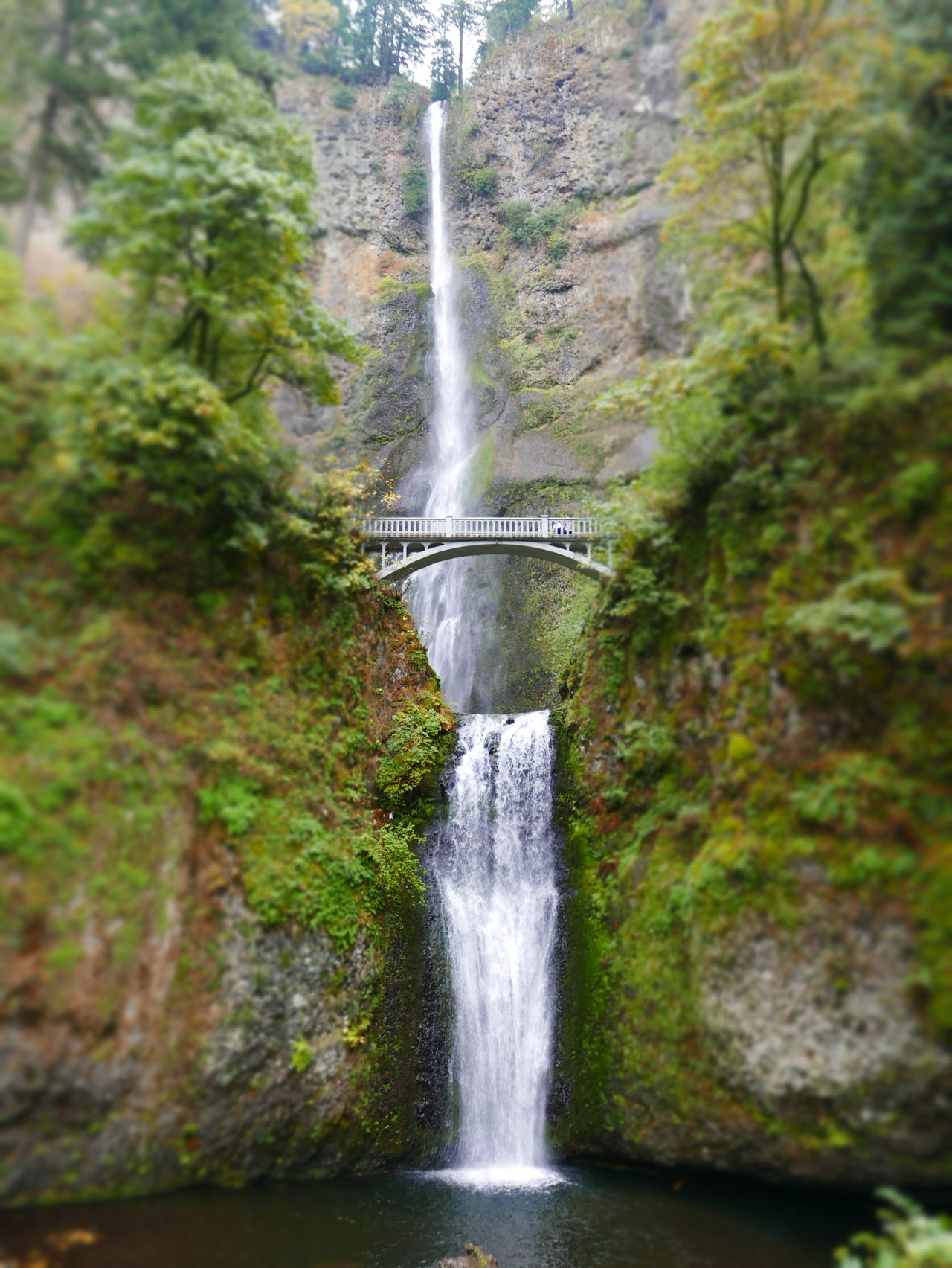 Beauty In Nature Flowing Water Multnomah Falls  Nature Outdoors Scenics Water Waterfall