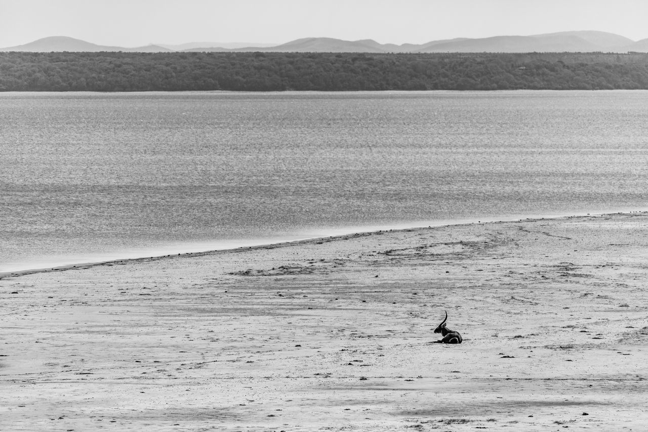 one animal, nature, animal themes, mountain, sand, day, beach, sea, tranquil scene, no people, water, scenics, beauty in nature, outdoors, tranquility, animals in the wild, mammal, clear sky, bird, sea life, sky