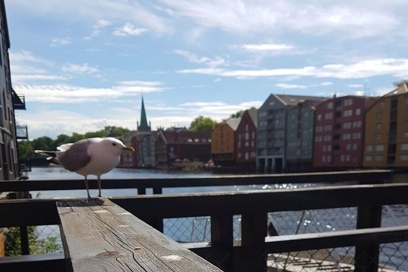 Trondheim ❤ Wood - Material Architecture Bridge - Man Made Structure Travel Destinations Built Structure Water Outdoors Cloud - Sky Sky No People Day Harbor Building Exterior City Cityscape Trondheim EyeEmNewHere Norway Dock Docks Dockside Summervibes Seagull Bird Norwegian