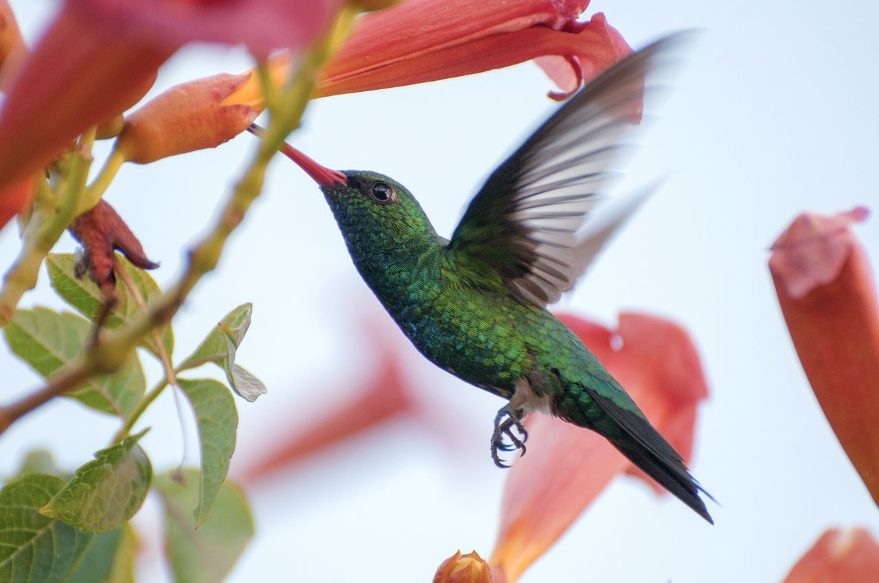 Animal Themes One Animal Nature Flower Close-up Beauty In Nature Hummingbird Animals In The Wild No People Day Freshness Animal Wildlife Fragility Outdoors