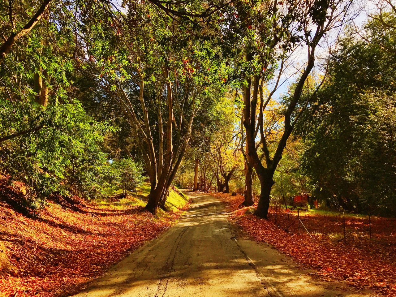Fall effect at mill valley creek