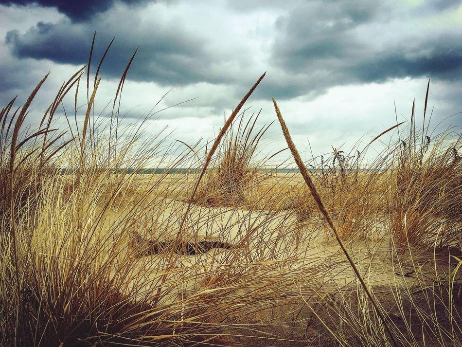 Sandy hook New Jersey USA winter day at the beach Nature Beach First Eyeem Photo EyeEmNewHere