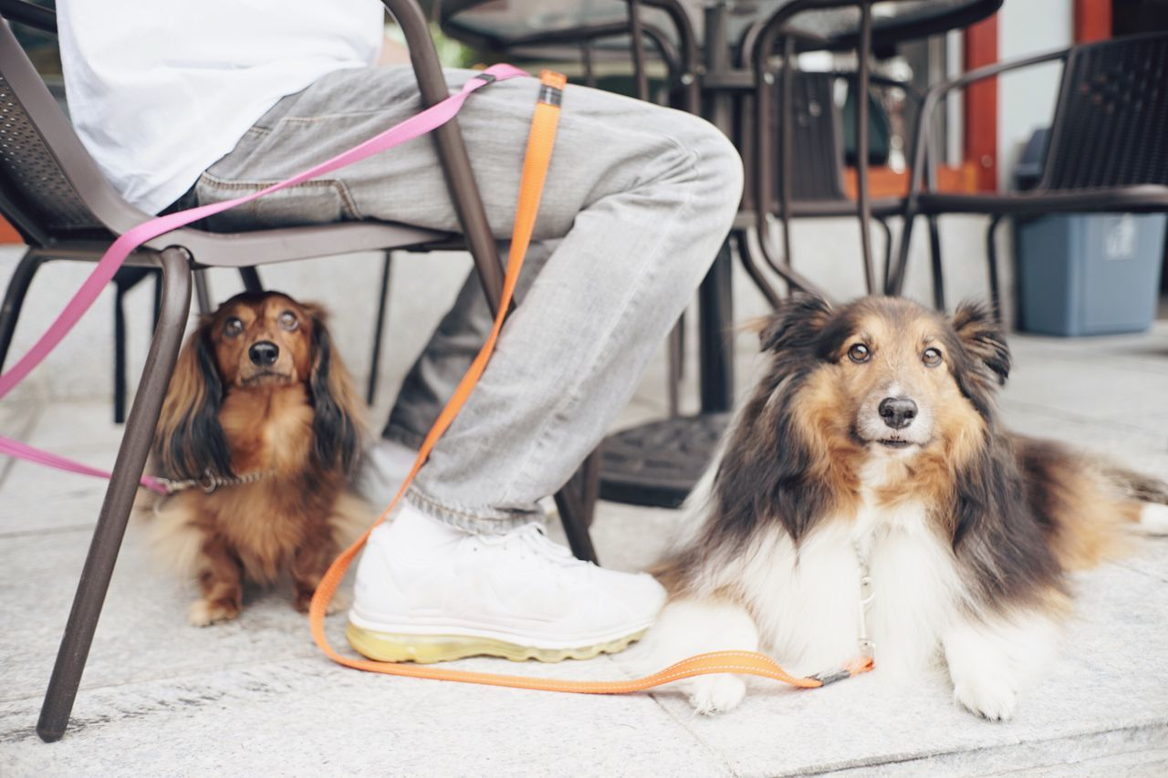 one cute family Ilovemydog Dog Sheltie Dachshund Family Love Pets Animals Lovely Cute Pets Two Is Better Than One
