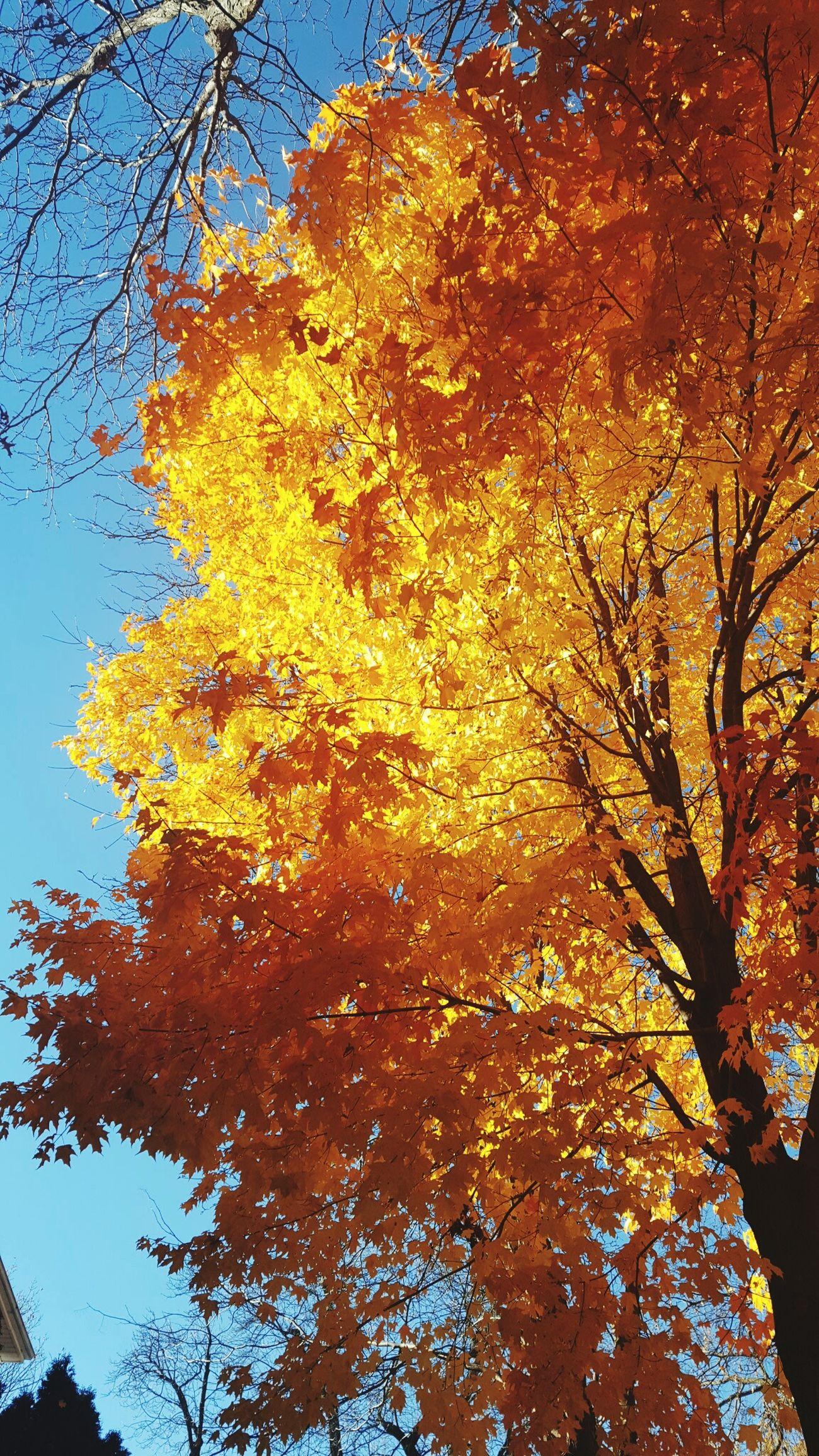 Fall Beauty Fallen Leaf