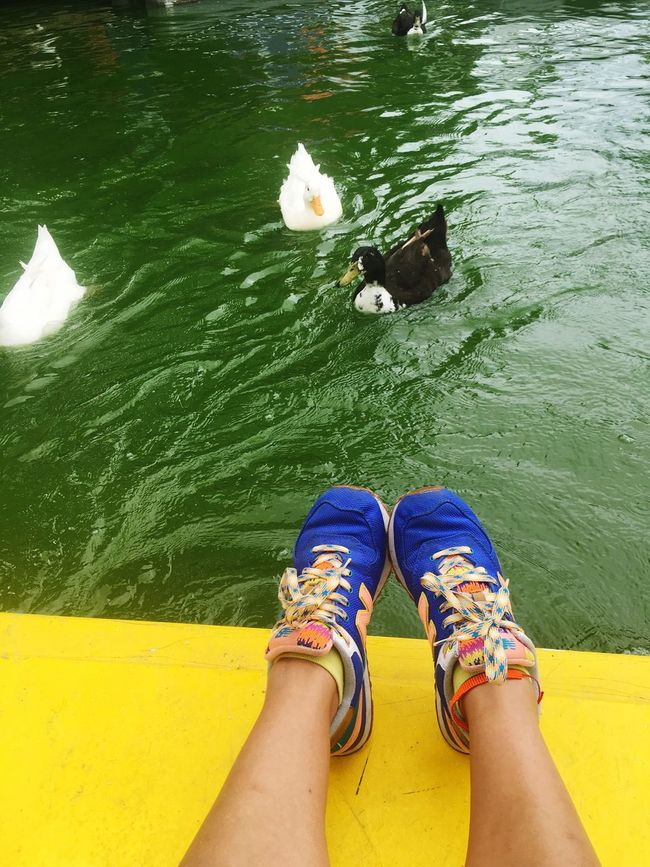 FreeTime Water Relaxation Tranquility Disfrutando De La Vida Sweet City Ducks Ship Nephews Family Cuak Cuak Cuak...