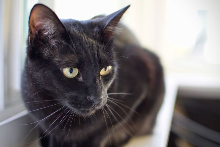 Animal Themes Black Color Catsofinstagram Close-up Domestic Animals Domestic Cat Feline Nikond3300 No People Whisker