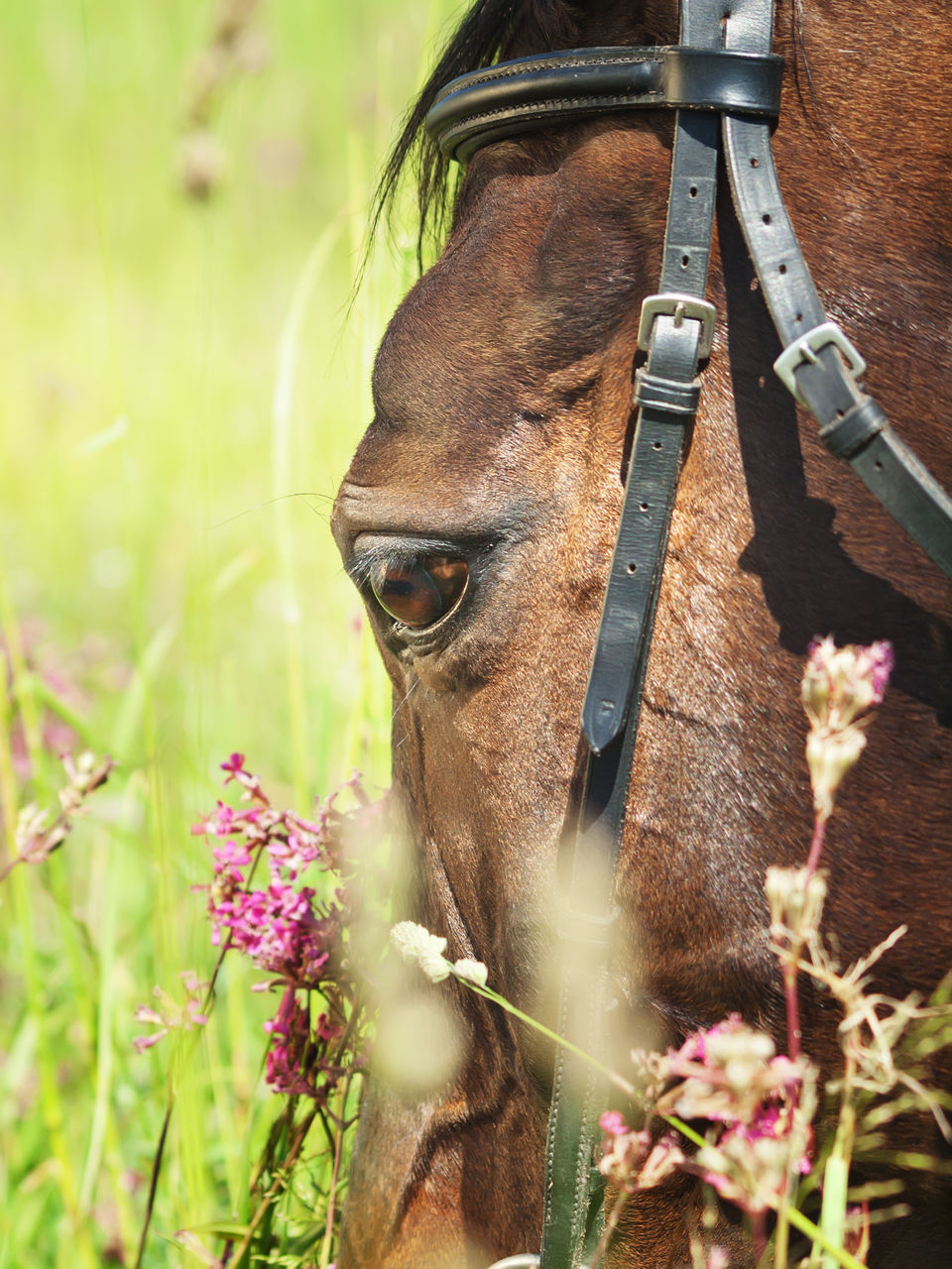 one animal, mammal, domestic animals, flower, animal themes, horse, day, no people, outdoors, animal head, livestock, field, nature, close-up, plant