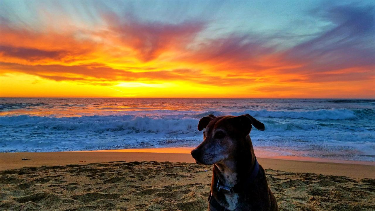 My best friend :-) Love ♥ Mydog Sunset Surf And Sand Beachphotography Beach Beautiful Nature Myhappyplace My Perspective Livelaughlove♡ California Coast California CA Life Hello World