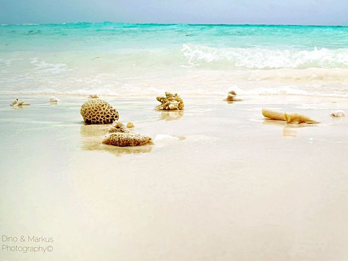 Tadaa Community Ocean Traveling Maldives Beach Island Beautiful Nature Beachphotography Macro Nature Landscape
