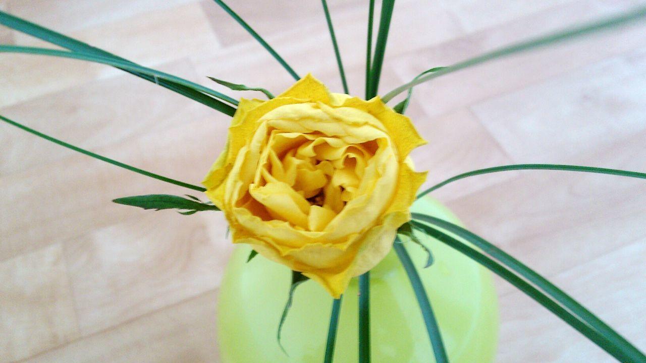 Taking Photos Flower Yellow Rose Green