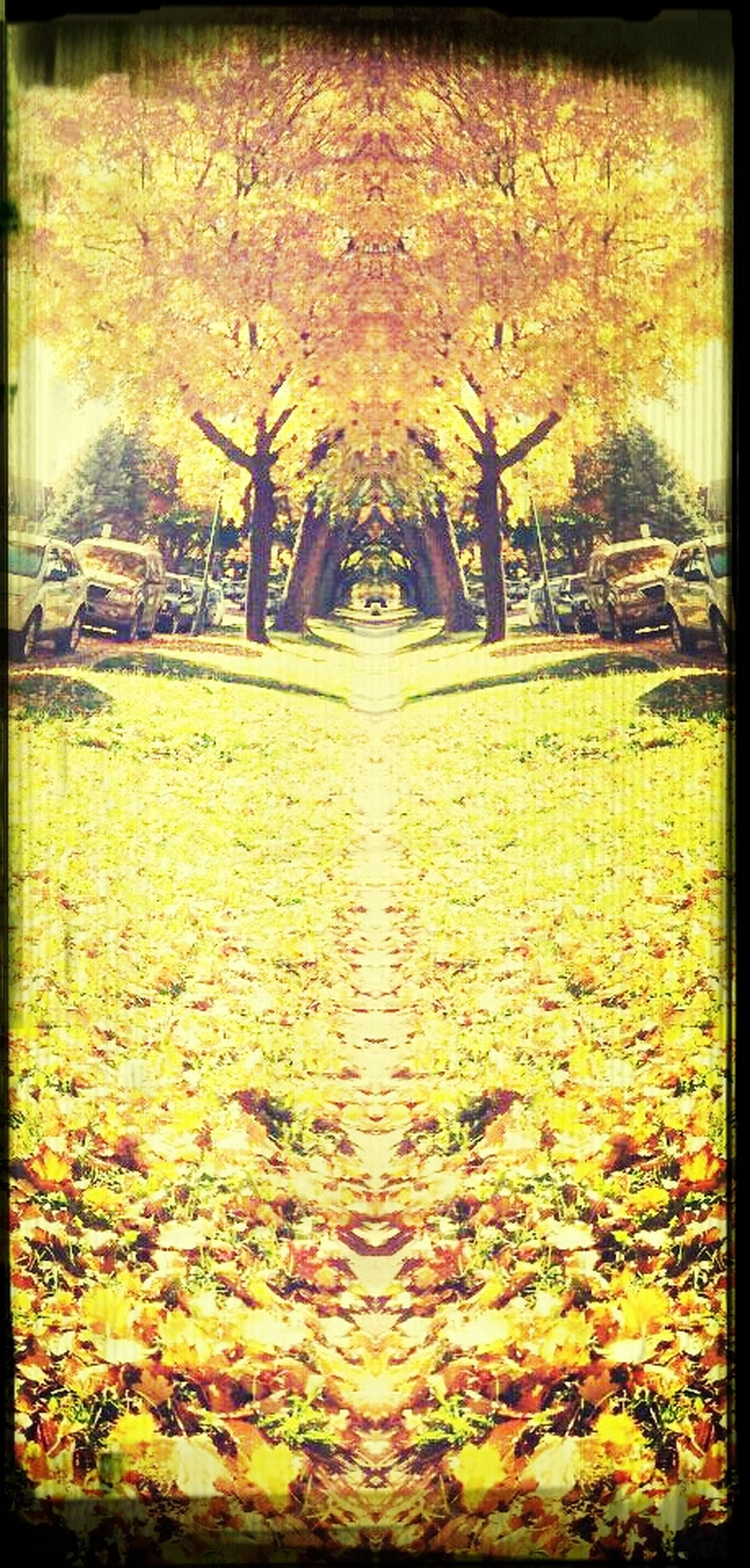 transfer print, tree, auto post production filter, autumn, tranquility, water, change, nature, leaf, beauty in nature, tranquil scene, park - man made space, season, growth, scenics, pond, lake, branch, outdoors, day