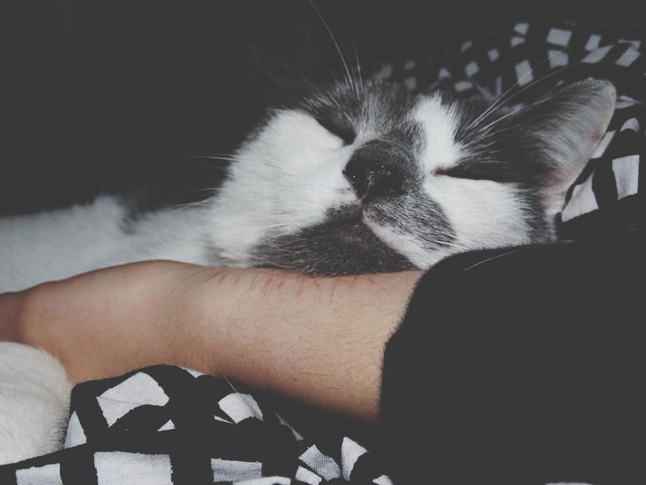Cat Girl Sweet Sleeping