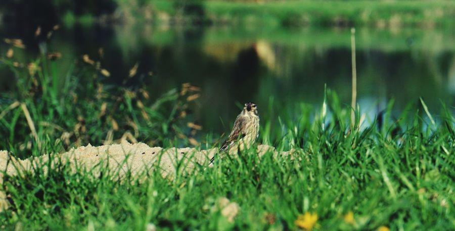 Bird Jezioro Summer ☀ Hello World Relaxing Leżing✌ With My Love ❤