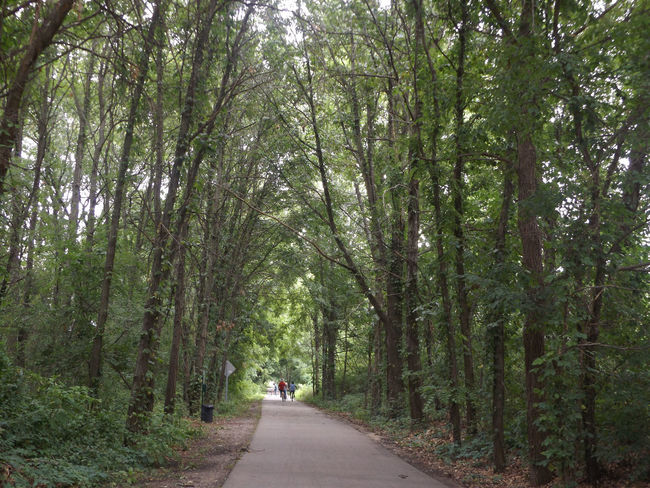 Nature On Your Doorstep Naturelovers Nature_collection Nature Photography Tree Canopy  Bike Trail Bike Ride