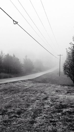 Black And White Power Lines For The Love Of Trees ~ Morning Has Broken
