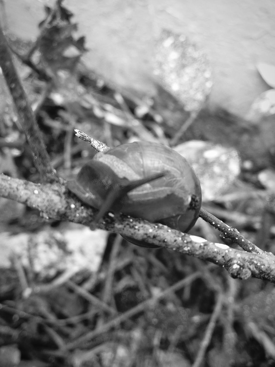 one animal, animal themes, snail, close-up, wildlife, gastropod, nature, no people, animals in the wild, outdoors, day, slug, fragility