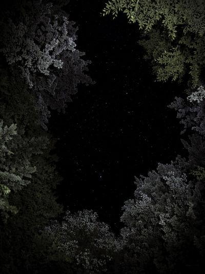 EyeEmNewHere Astral Astronomy Night Night Sky Skyscape Stars Starscape