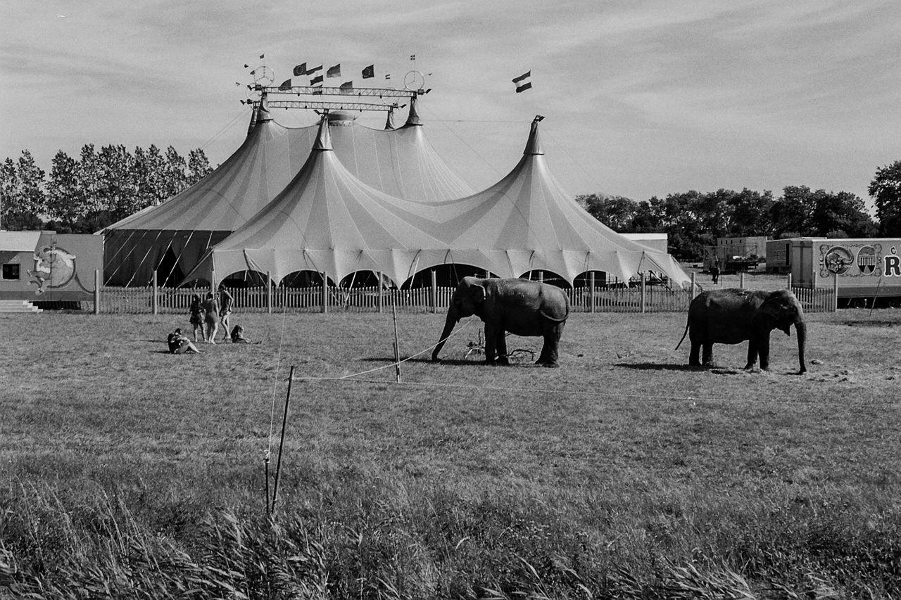 Circus Animal Black And White Circus Circus Life Circus Tent Elephants Grassfield Traveling Circ