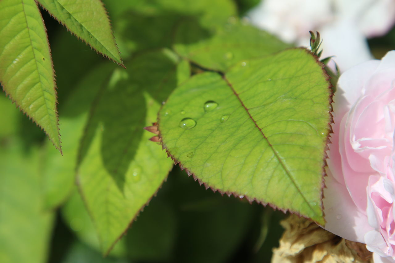 Beauty In Nature Close-up Day Fragility Freshness Green Color Growth Leaf Nature No People Outdoors Plant Water Water Drops Waterdrops On Leaf