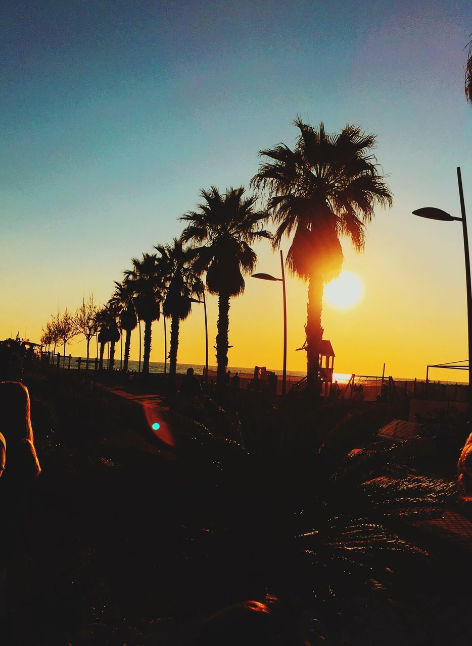 sunset, palm tree, silhouette, tree, outdoors, clear sky, scenics, tranquil scene, beauty in nature, nature, sun, tranquility, sky, beach, no people, growth, vacations, day