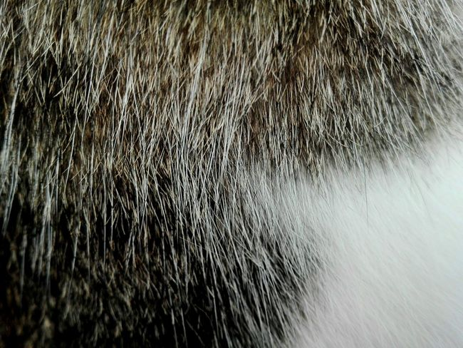 Maximum Closeness Cat Fur Close-up Pets Domestic Animals Domestic Cat White Grey Huawei Huaweiphotography Huawei P8 Lite. The Week Of Eyeem No People Backgrounds Kitten Day Eyeemphoto