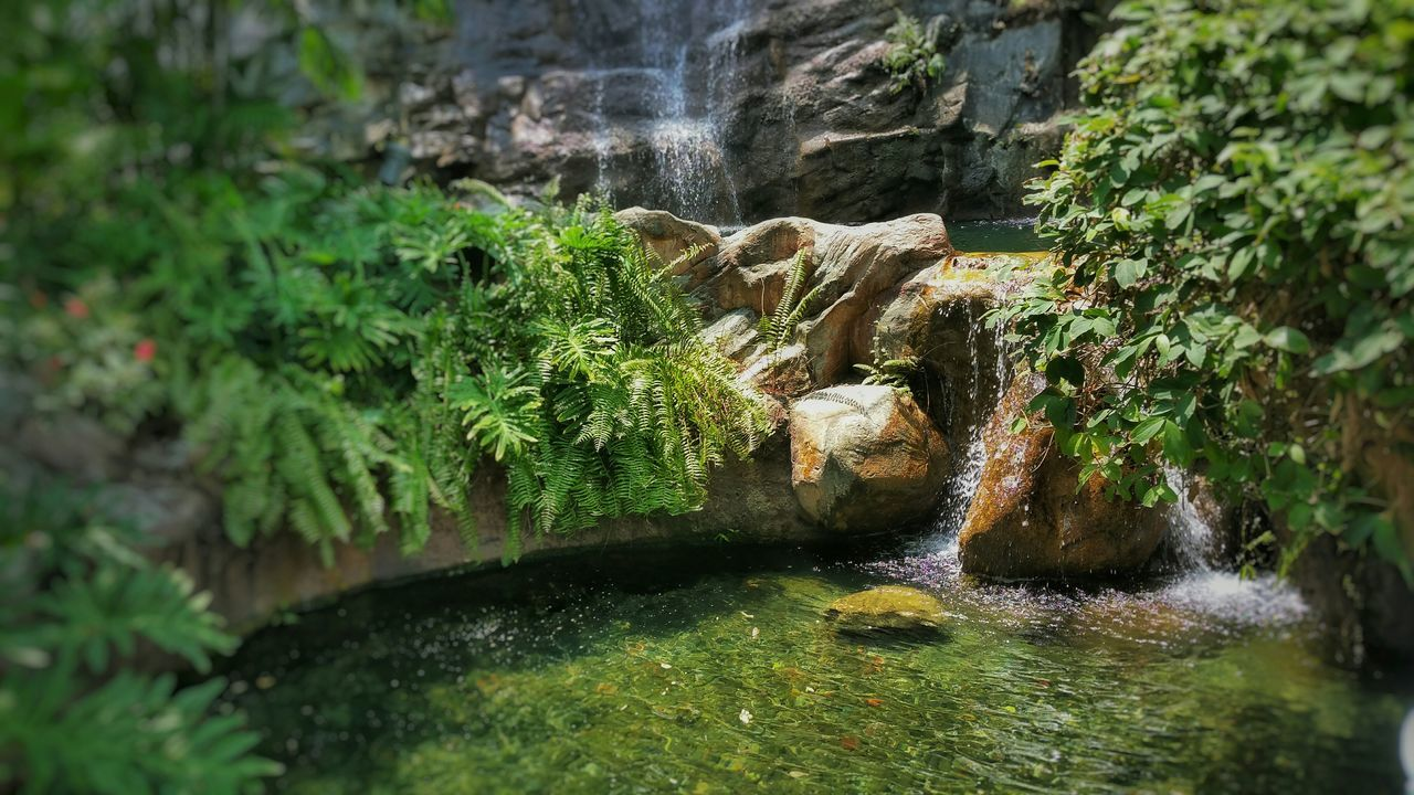 Waterfall Nature Plants Photography Relaxing Learn & Shoot: Simplicity Seeing The Sights My Best Photo 2015