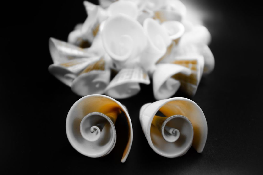 The OO Mission Snails Snailshell Snail Shell Juwels Jewelry Necklace Earth Colours Earth Colors Fine Art Photography Studio Photography Summer Indulgence Focus On Foreground Coffee Freshness Fresh Cup Showcase July Color Palette Two Is Better Than One