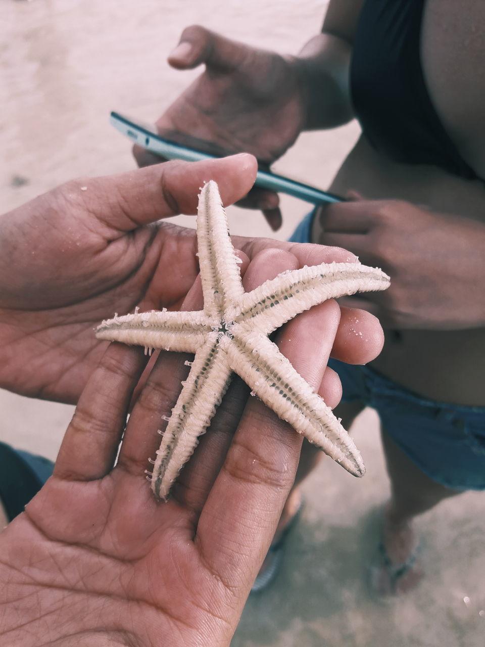 Close-Up Of Starfish On Hand