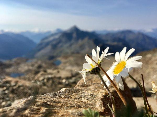 La speranza cresce ovunque... Flowers Mountain Monte Rosa Hope Paesaggio Dream Art