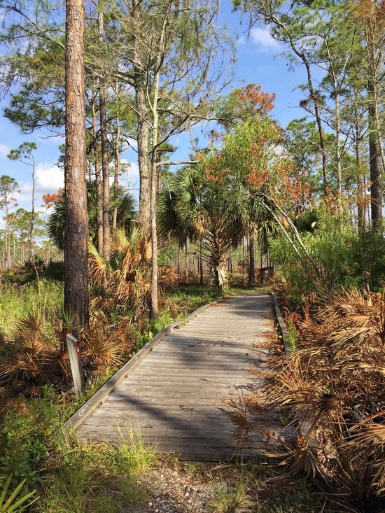 Slightly singed vegetation Jonathan Dickinson State Park Florida Park Pine Trees Pines Palmetto Boardwalk Boardwalk Photography