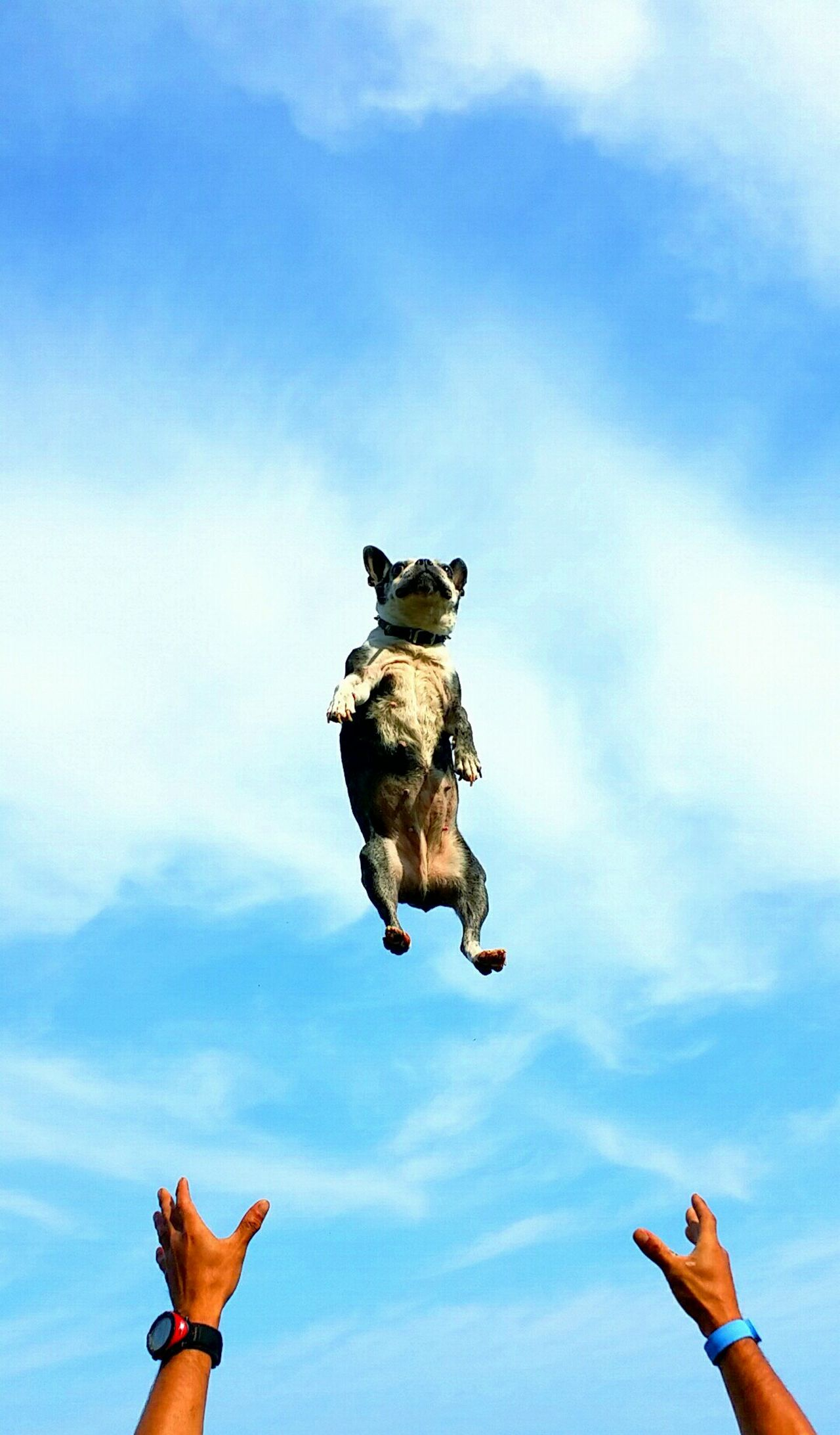 Beautiful stock photos of funny animal, Animal Themes, Arms Raised, Cloud - Sky, Cropped