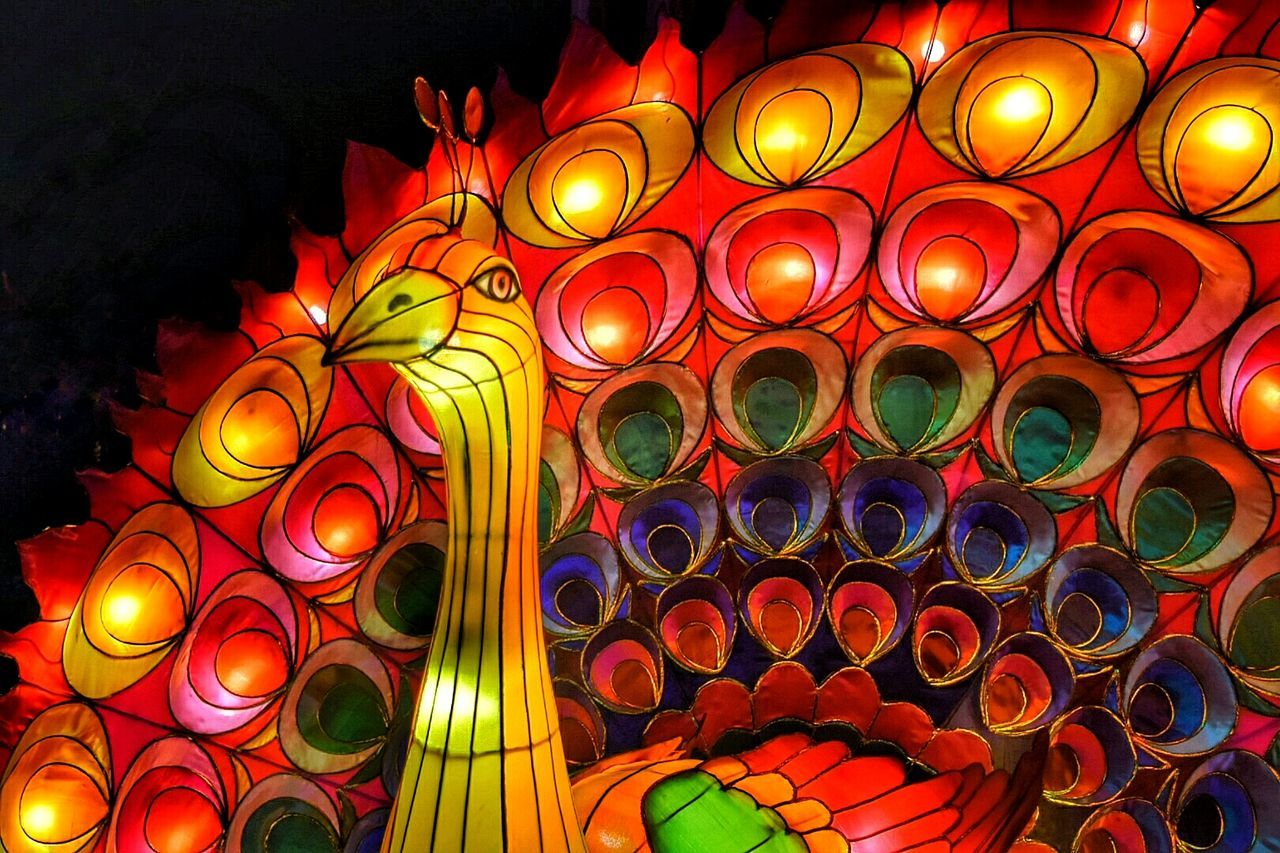 Chinese Lantern Festival Of Lights Dandenong  Australia Melbourne Multi Colored Peacock Creativity Sculpture Chinese Lanterns WoodLand Illuminated Night Photography No People Lantern Colorful Fairy Lights Decoration Night Vibrant Color Electric Light Culture Variation Peacock Blue Light