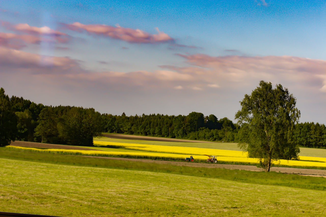 tree, grass, sky, nature, field, green color, beauty in nature, scenics, tranquility, cloud - sky, landscape, tranquil scene, growth, no people, outdoors, day, golf course