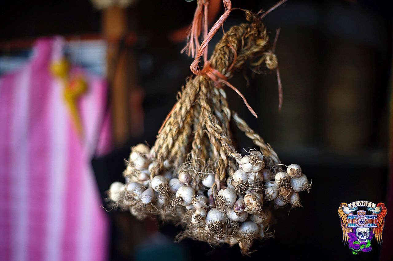 Canonphotography Close-up No People Focus On Foreground Nature Honduras Day Garlic Food