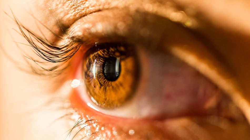 Beautiful stock photos of fotografie,  30-34 Years,  Chile,  Close-Up,  Extreme Close-Up
