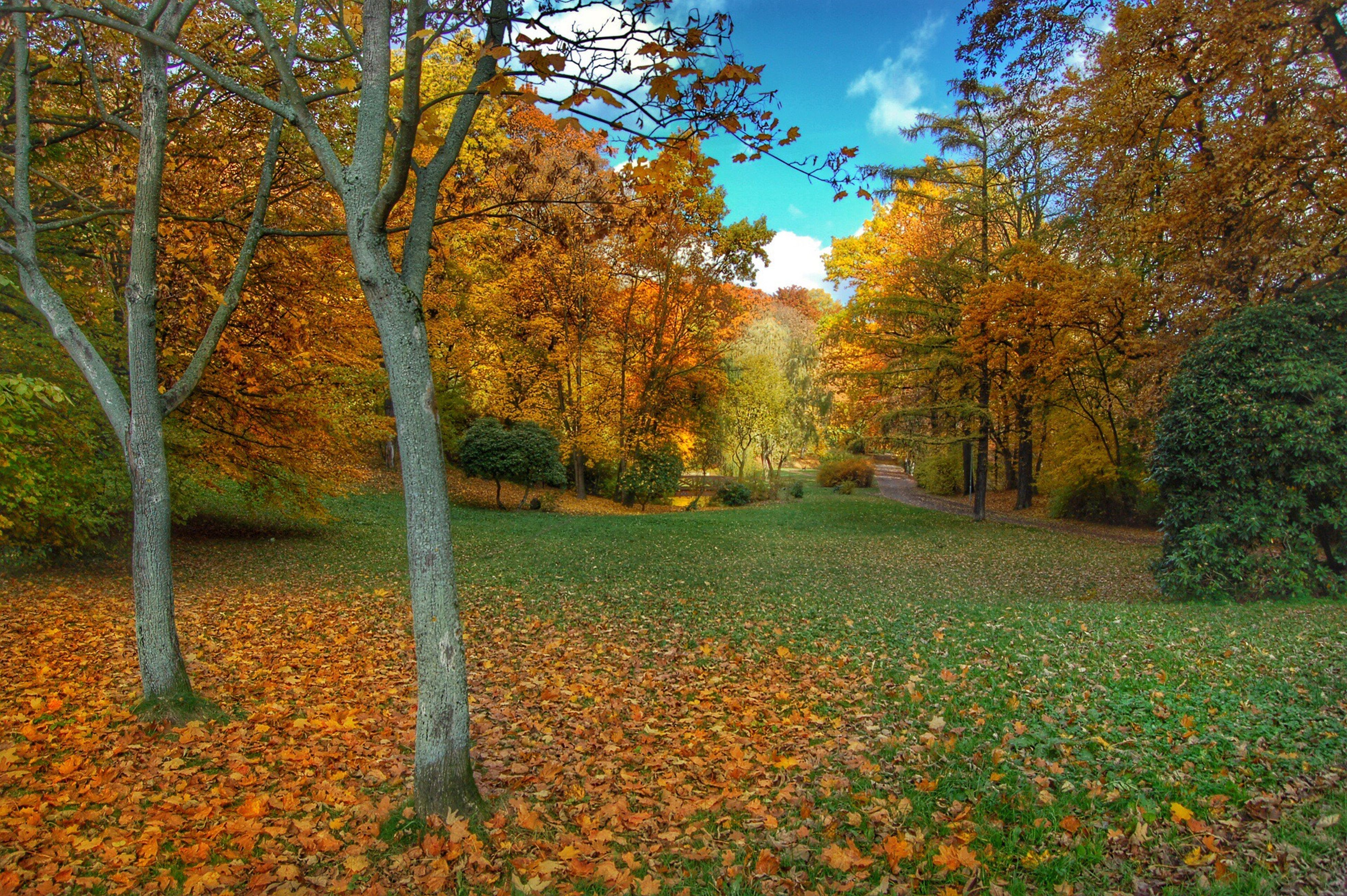tree, nature, autumn, beauty in nature, growth, sky, outdoors, change, tranquility, leaf, day, no people, scenics, branch, water, grass