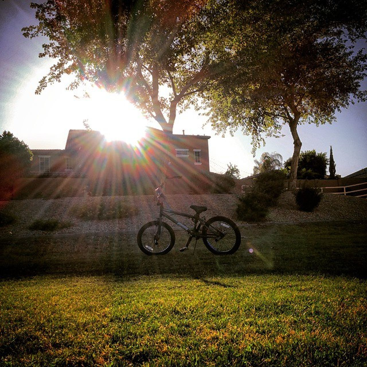 sunbeam, tree, lens flare, grass, bicycle, sun, sunlight, transportation, day, field, outdoors, nature, growth, sky, no people, building exterior, beauty in nature