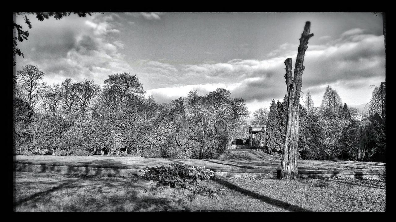 Longford Park Black And White Black & White Black And White Photography Parks Park Tree Amateur Photography